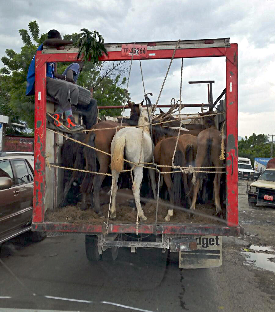 Haitian Horse